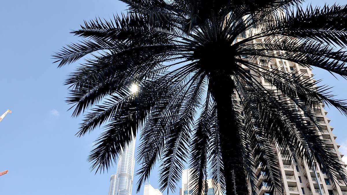 dubay_2 Дубай в центре технологий